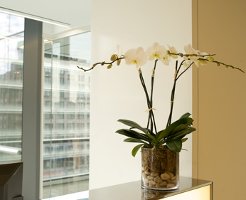 Corporate Floral Service Potted Orchids